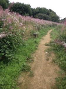 Himalayan balsam invaded public walkway along the otherwise nettle and bramble infested White Cart Water in Renfrewshire.