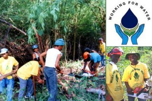 © 2012 Garden Route Initiative, Working for Water Programme.