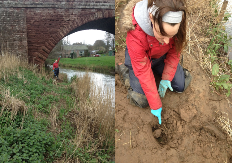 Finding the AstroTurf mats, covered by mounds of sediment deposition, on the Dean Water.