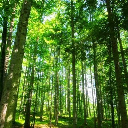 Nice looking woodland, good foraging habitat for bats.